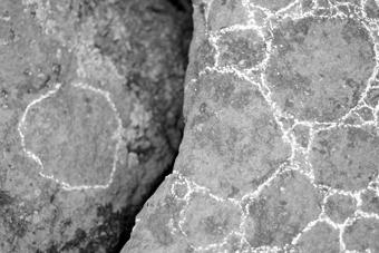 bryophyte in-situ (dolmen frébouchère 1)