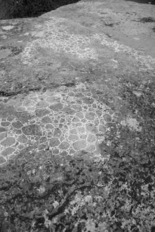 bryophyte in-situ (dolmen frébouchère 2)