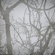 arbre 7