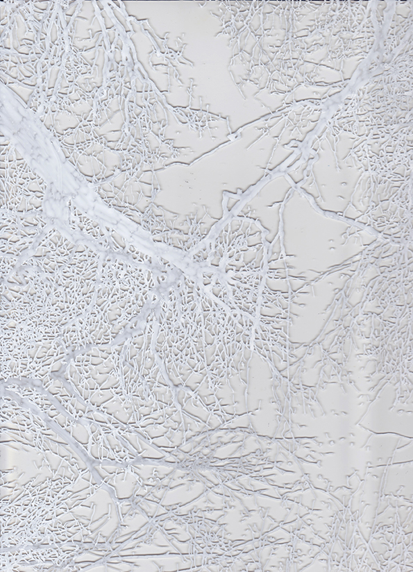 arbre 740 (détail)