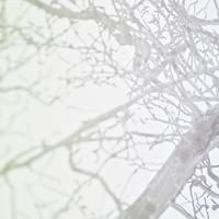 arbre 2870 détail 2