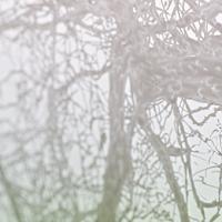 arbre 2870 détail 1