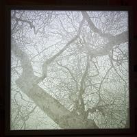 arbre 2870
