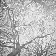 arbre 8