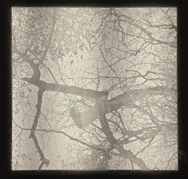 arbre 9900