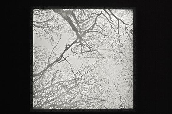 arbre 7403