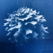 corail 2608