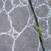 bryophyte in-situ (eugène carrière 3)