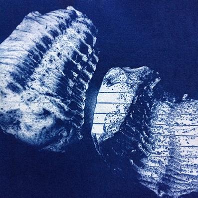 Trilobite 2396