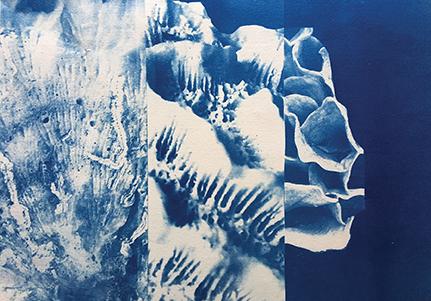 chimère - cyanotype sur papier - brigit ber